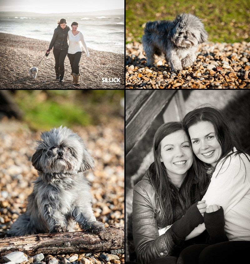 Hampshire pet photography - Sillick Photography